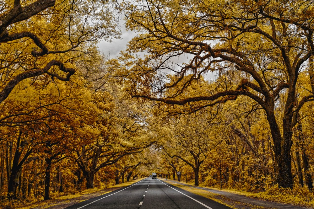 Scenic Highway in Florida's Clay County
